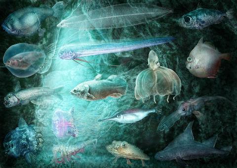 深海魚 ラブカ